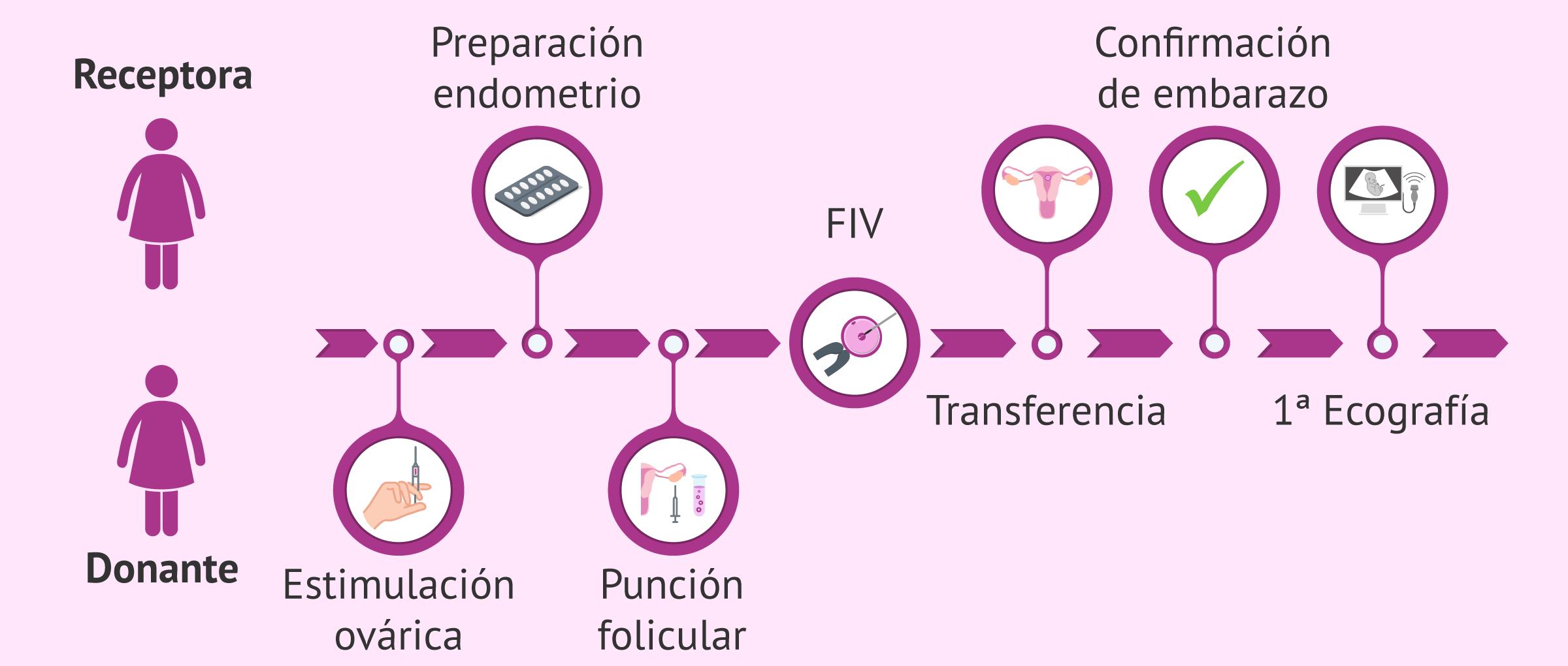 Te enseñamos el paso a paso en la fecundacion invitro con ovodonacion desde el instituto de fertilidad mallorca lideres en reproduccion asistida en las Islas Baleares