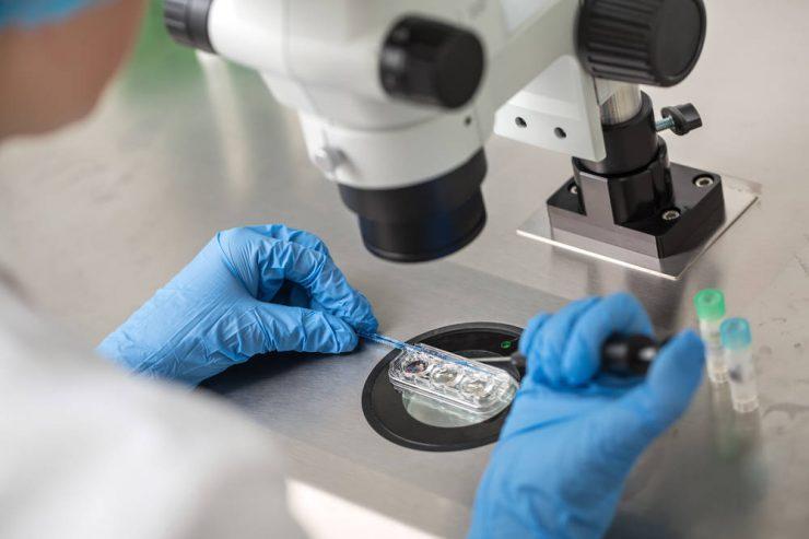 Hoy en nuestro blog de infertilidad te lo contamos todo sobre los blastocitos y la importancia que tienen en los tratamiento de fecundacion in vitro