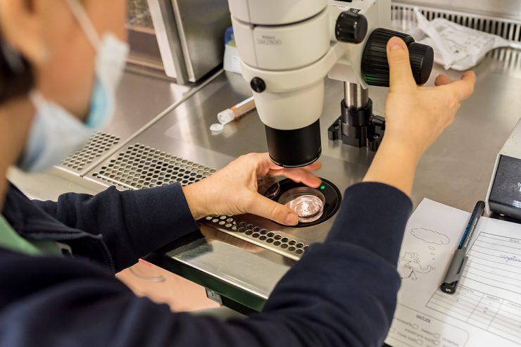 Transferencia embrionaria hoy en nuestro blog de infertilidad IFER Mallorca te explicamos todo el proceso de la transferencia de embriones