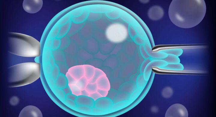biopsia-embrionaria-ifer-mallorca