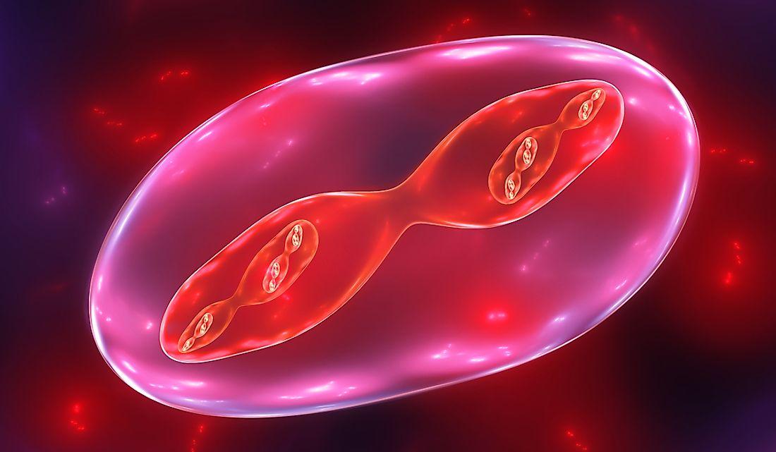 meiosis-que-es-y-como-afecta-al-embarazo-instituto-de-fertilidad-mallorca